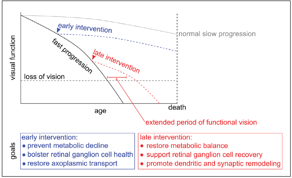 <p>Figure. There is potential for functional vision recovery with neuroprotective treatments at multiple stages during glaucomatous progression. It is becoming increasingly important to understand the early factors that influence retinal ganglion cell health during normal aging and following insults from elevated IOP. Many systemic risk factors predispose retinal ganglion cells to bioenergetic failure, such as advancing age, genetics, and loss of metabolic substrates (Table 1), whereas elevated IOP, neuroinflammation, and hypoxic damage necessitate the initiation of energy-expensive repair processes. A consequence of this process is an induction of compensatory mechanisms that divert energy use from retinal ganglion cell axon potential propagation to repair, initiating retinal ganglion cell degeneration and remodeling. The following degenerative processes, synapse and dendrite pruning, protect injured retinal ganglion cells from excitatory bipolar cell inputs facilitating repair. If compensatory processes permit repair function, then dendrites and synaptic inputs can be restored. If not, then potentially irreversible apoptotic processes are induced. Preventing retinal ganglion cell decline prior to the initiation of apoptosis should be a key factor in designing the next generation of glaucoma neuroprotective treatments. (Figure adapted in part from Caprioli J.<sup>1</sup>)</p>